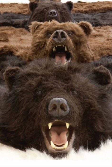 Fake Bear Rugs With Head Area Ideas